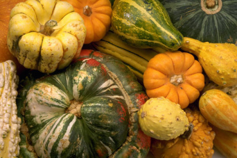 Squash the Thanksgiving Myth :-)